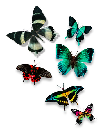 Different color butterflies photo
