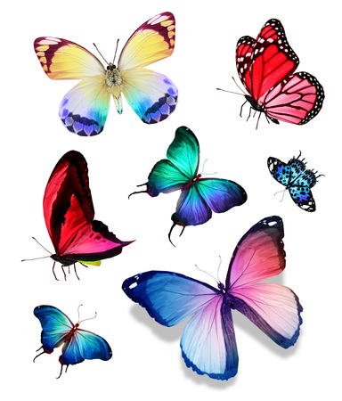 black and blue butterfly flying: Different color butterflies