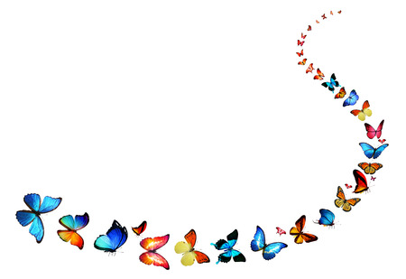 Line of flying color butterflies photo