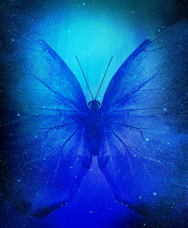 나비와 별의 클러스터 공간보기