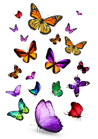 butterfly flying: Different color butterflies