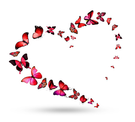 Heart with butterflies photo