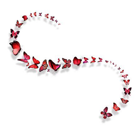 rosa negra: L�nea de vuelo rojo y rosa mariposas Foto de archivo