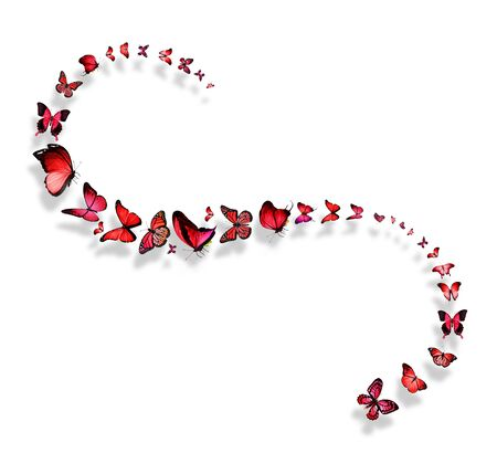 black butterfly: Line of flying red and pink butterflies Stock Photo