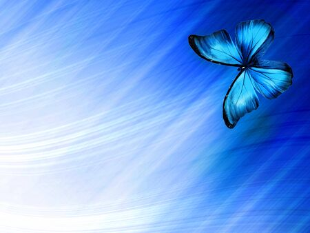 Blue butterfly on sky blue background Stockfoto