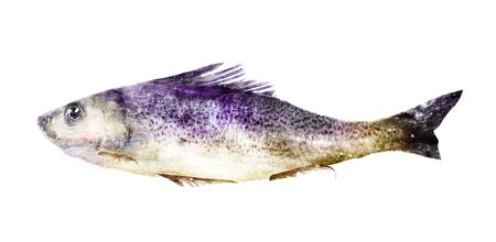 Watercolor fish on white background Stok Fotoğraf