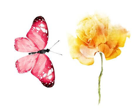 Watercolor flowers , isolated on white background Stock Photo