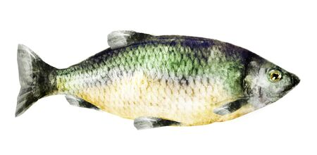Watercolor fish on white background Banque d'images