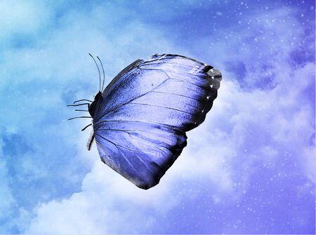 Blue butterfly on sky blue background Stock Photo
