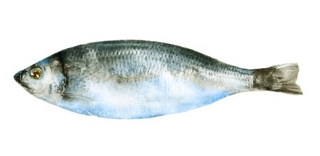 Watercolor fish on white background Stockfoto