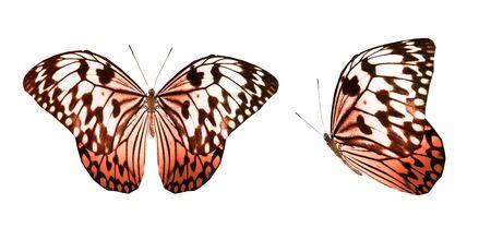Mariposas de colores, aisladas sobre fondo blanco