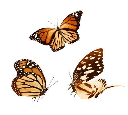 Farbige Schmetterlinge, isoliert auf weißem Hintergrund