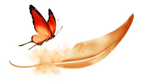 Beautiful color feather and butterfly isolated on white background Standard-Bild