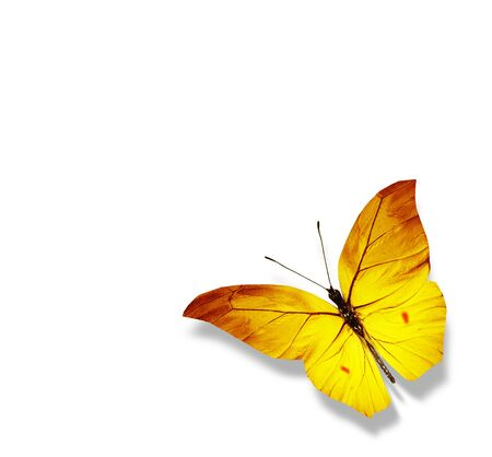 Color butterfly , isolated on white background Foto de archivo - 137895552