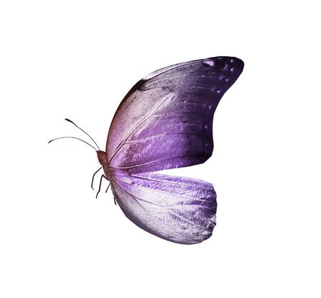 Color butterfly , isolated on white background Foto de archivo - 137895166