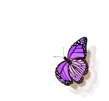 Color butterfly , isolated on white background Foto de archivo - 137895174