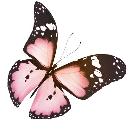 Farbe Schmetterling, isoliert auf weißem Hintergrund