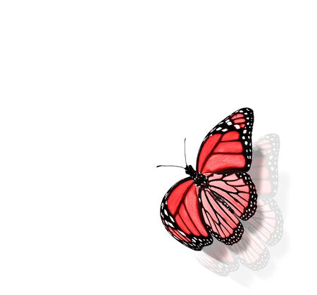 Color butterfly , isolated on white background Foto de archivo - 137895464