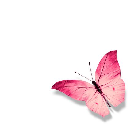Color butterfly , isolated on white background Foto de archivo - 137895500