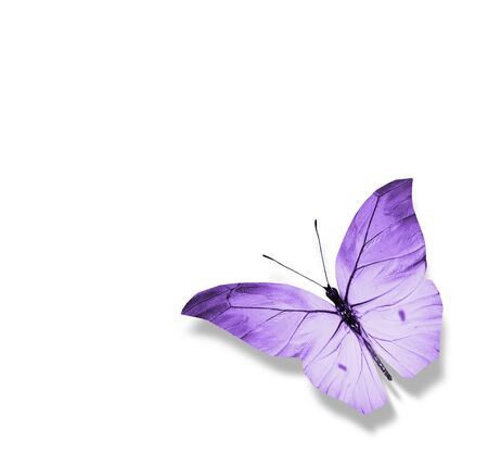 Color butterfly , isolated on white background Foto de archivo - 137895385