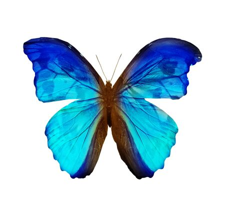 Color butterfly , isolated on white background Stock Photo