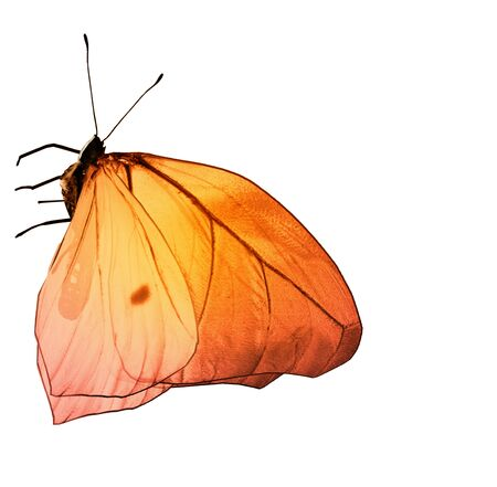 Color butterfly , isolated on white background Foto de archivo - 137895487