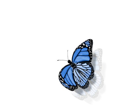 Color butterfly , isolated on white background Foto de archivo - 137895431