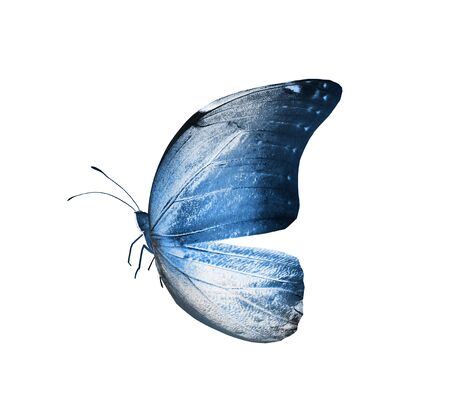 Color butterfly , isolated on white background Foto de archivo - 137895571