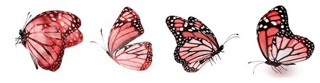 Color natural and watercolor butterflies , isolated on white background Stock Photo