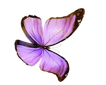Mariposa de color, aislado sobre fondo blanco.