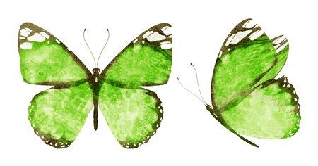Deux papillons aquarelles , isolés sur fond blanc