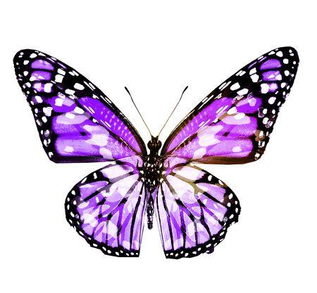 Kolorowy motyl, na białym tle