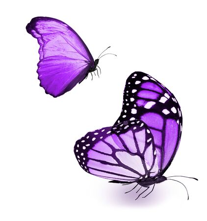 Color butterflies , isolated on white background