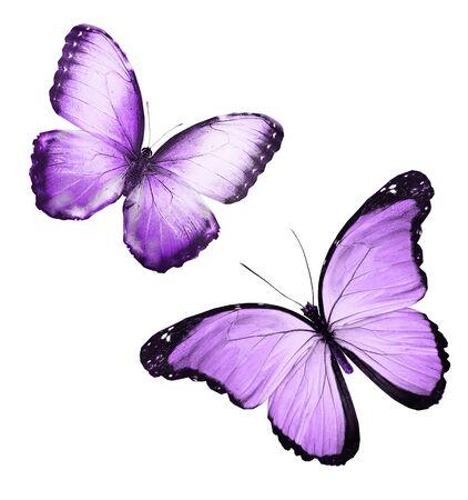 Kleur vlinders, geïsoleerd op een witte achtergrond Stockfoto