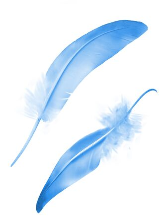 Beautiful color feather isolated on white background