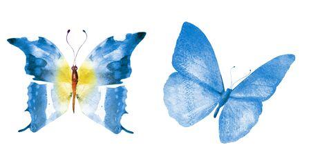 Twee aquarel vlinders, geïsoleerd op een witte achtergrond