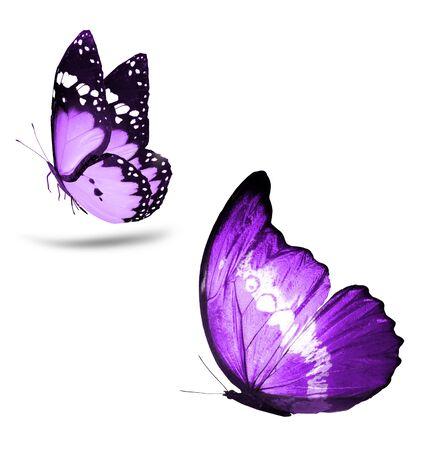Farbige Schmetterlinge, isoliert auf weißem Hintergrund Standard-Bild