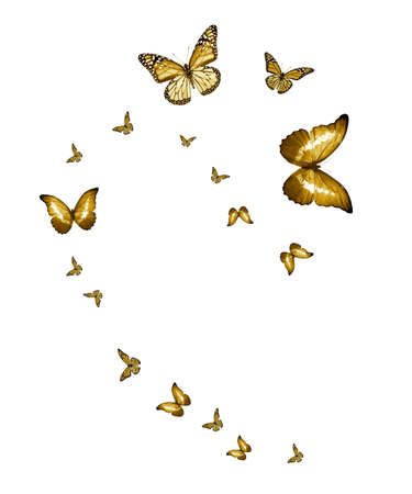 Flock of flying butterflies isolated on white