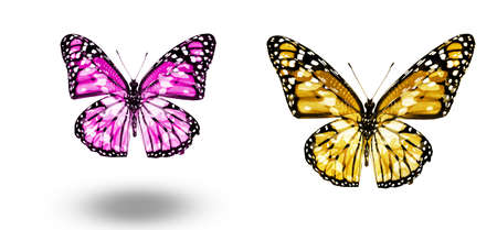 Color butterflies, isolated on white background Imagens