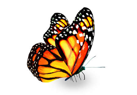 Color monarch butterfly, isolated on the white background Imagens