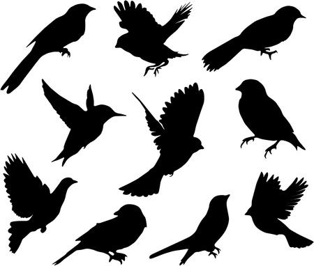 silhouette aquila: Impostare Birds.Vector