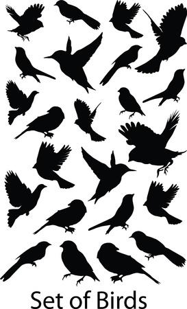 sparrows: text839(1).jpg