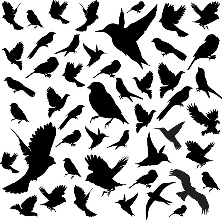 animal silhouette: Set Birds Vector Illustration
