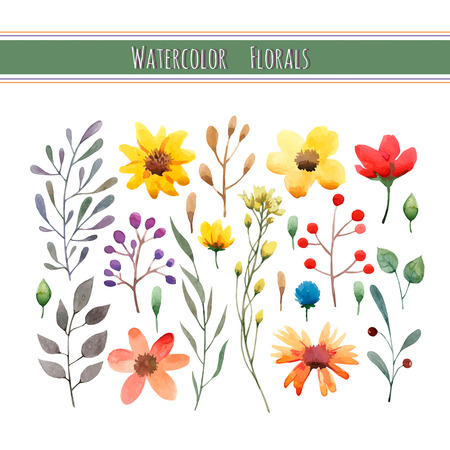 botanical drawing: Watercolor floral collection with leaves and flowers. Wedding, romantic collection.Spring or summer design for invitation, wedding or greeting cards. Vector illustration
