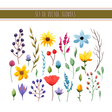 botanical gardens: Beautiful floral collection with leaves and flowers. Wedding, romantic collection.Spring or summer design for invitation, wedding or greeting cards. Vector illustration
