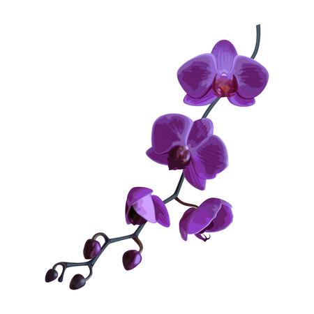 Schöne violette tropische Orchideenblume. Vektor-Illustration.