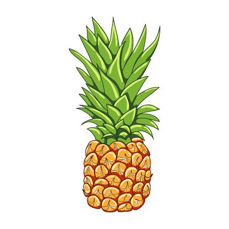 Pineapple on a white background. Vector illustration. Çizim