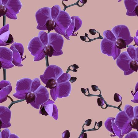 Beautiful violet tropical orchids flower.  Vector illustration.