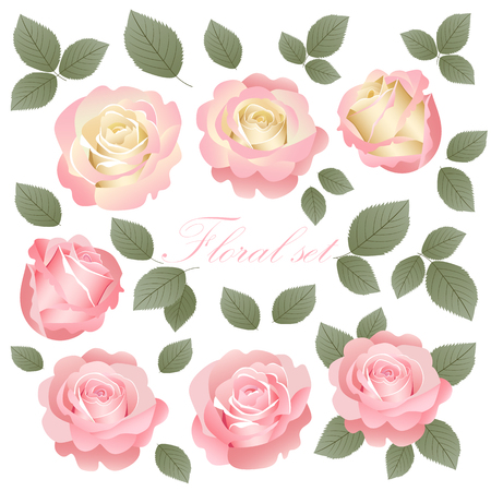 Vector set of beautiful and delicate vintage roses.Vector illustration. Stok Fotoğraf - 123521099