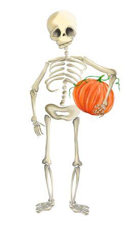 Illustrated human skeleton with pumpkin halloween